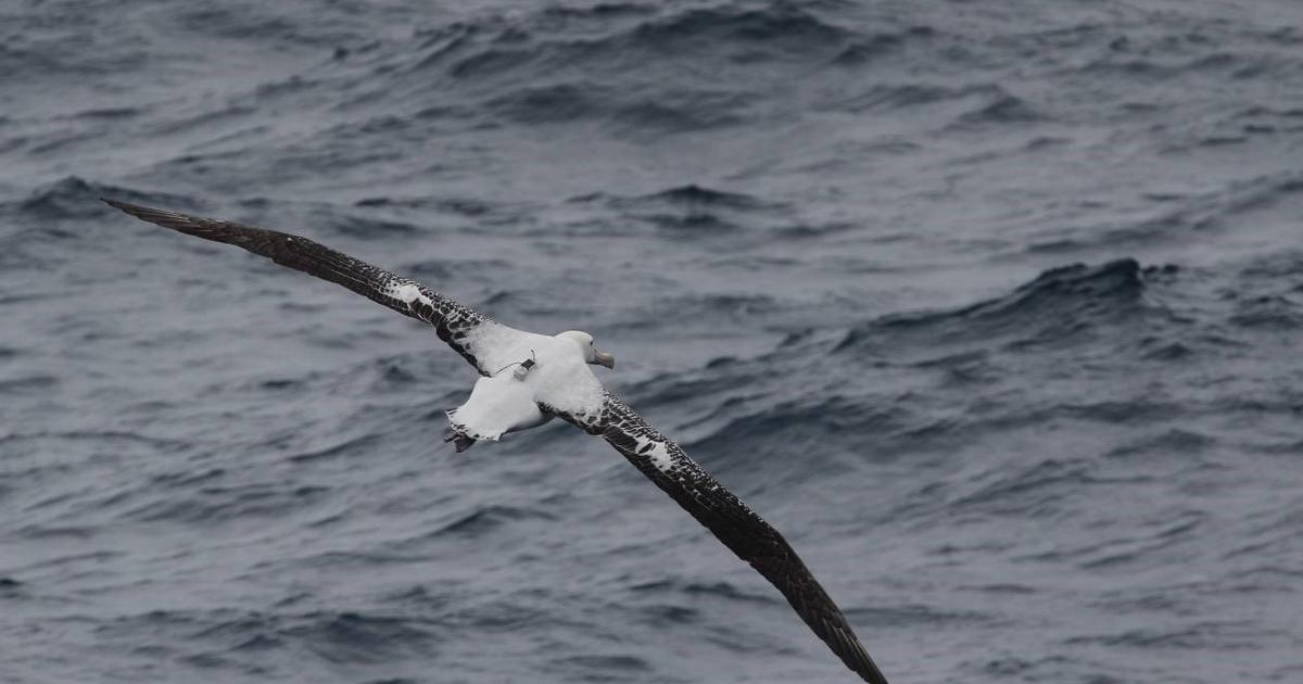 Albatross kitted out with radar detectors spy on illegal fishing boats
