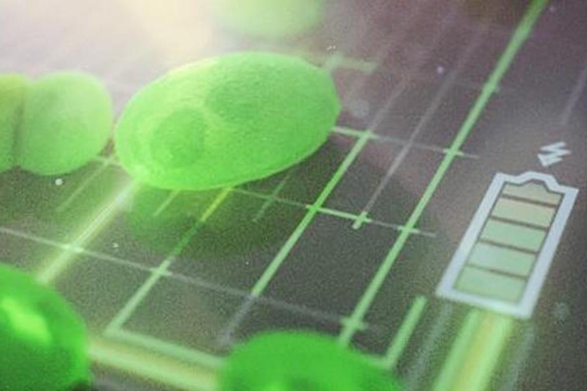 A University of Cambridge team has developed a new algae fuel cell that's five times more efficient than existing devices