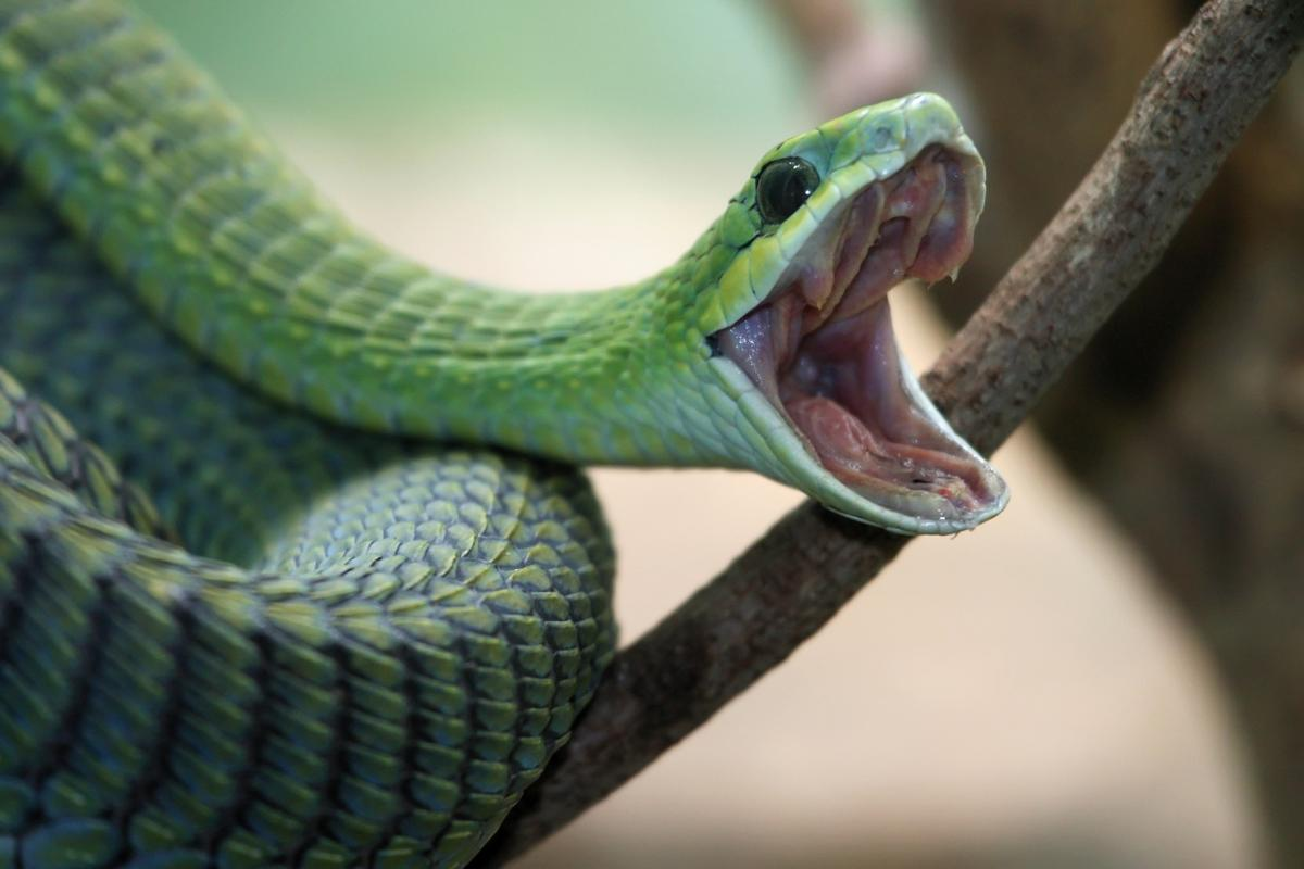 Participants in the study became less afraid of previously-feared animals, such as snakes