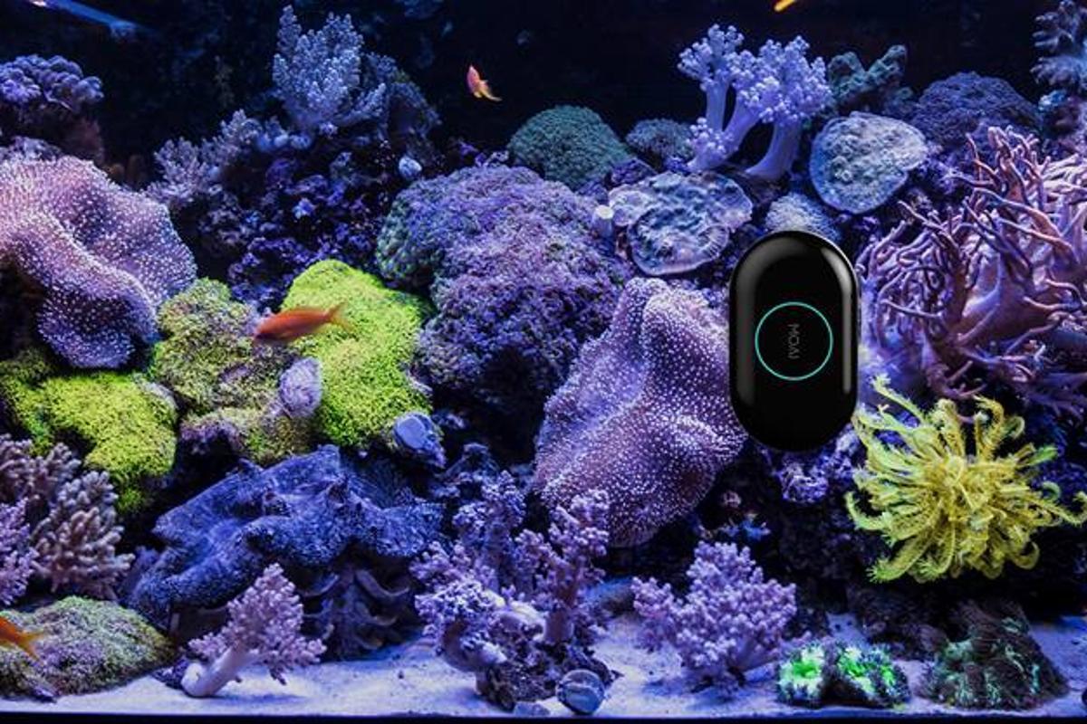 The MOAIrobot moves across aquarium glass on its own