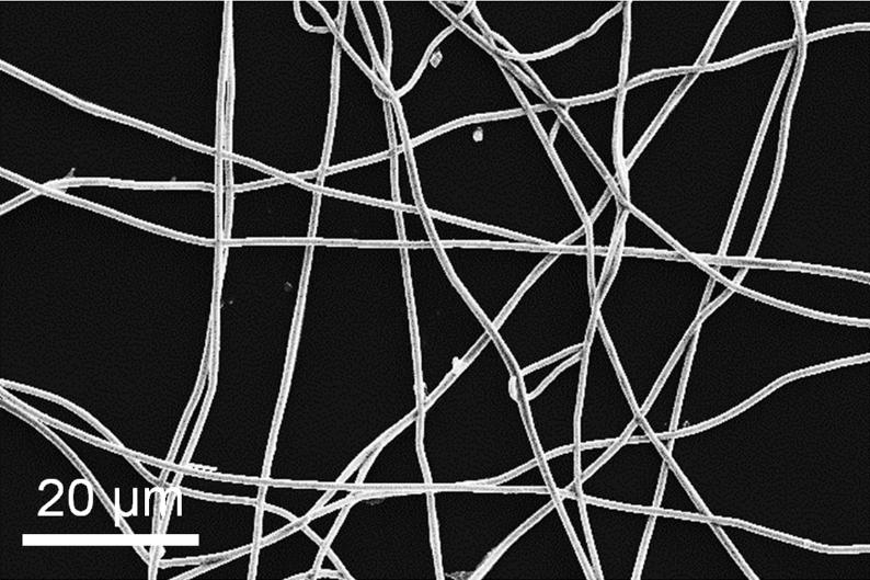 The conductive, copper-plated fibers are entangled, and the spaces between them make the thin film highly transparent