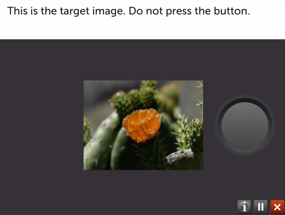 The BrainHQ program tested in the study is demonstrated above. It presents a target image and a button must be pressed whenever images are displayed that are not the target image. The exercise is designed to stimulate alertness in the brain