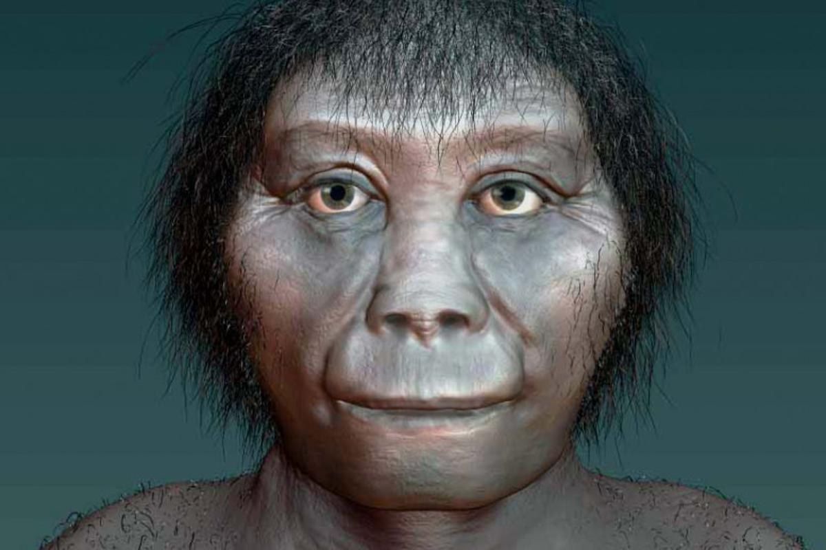 "An artist's rendition of Homo floresiensis – new analysis has shown that these ""hobbits"" are unlikely to have evolved from Homo erectus"