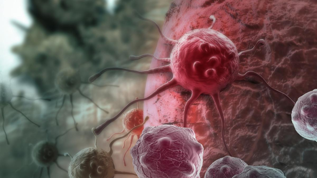 Research from the Walter and Eliza Hall Institute of Medical Research could help CAR-T cell therapy be adapted to treat solid tumors
