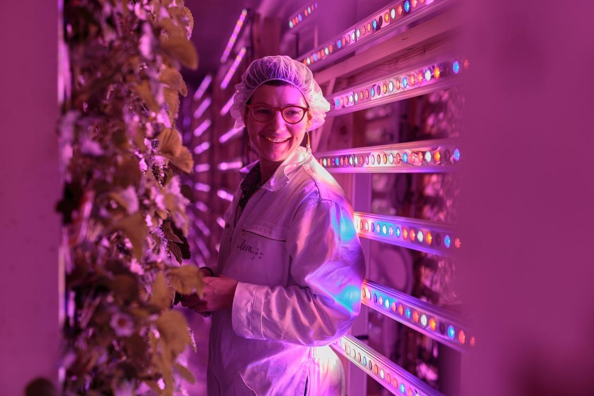 Agricool focuses on growing fruit in its shipping container farms, rather than leafy greens