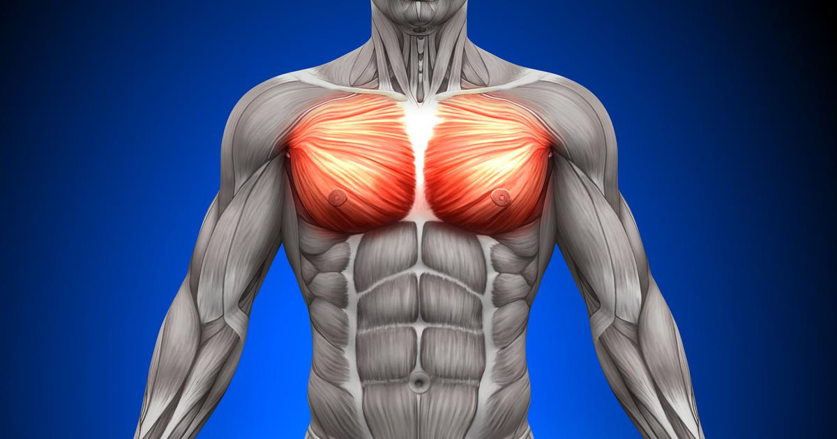 Molecule found to promote muscle health in response to magnetic fields