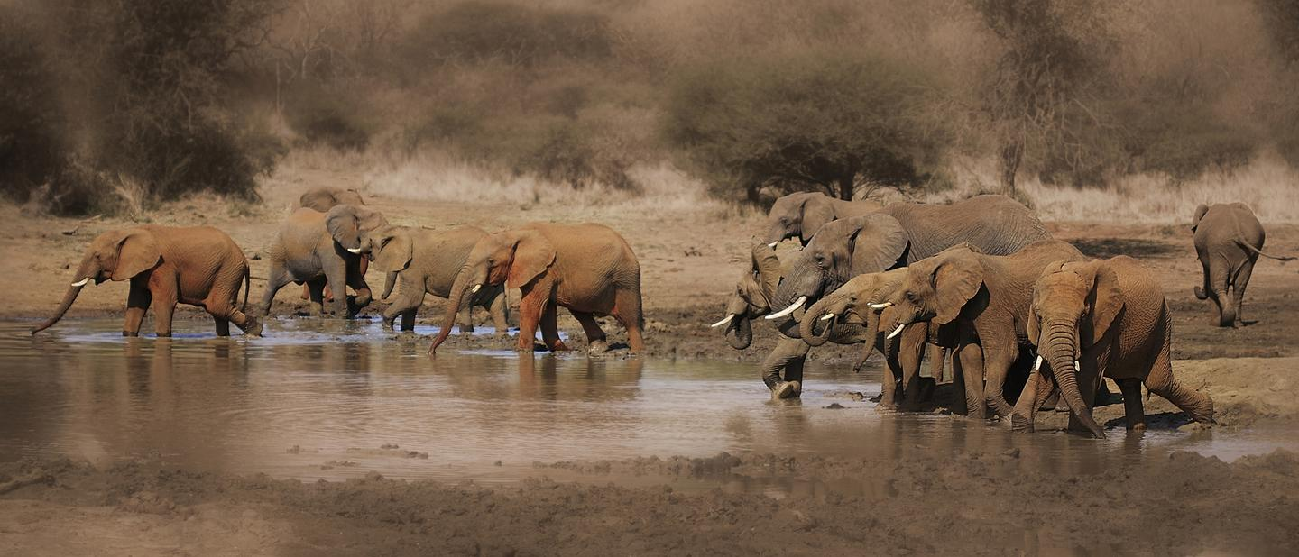 A computer algorithm allows elephants in the wild to be surveyed via satellite imagery
