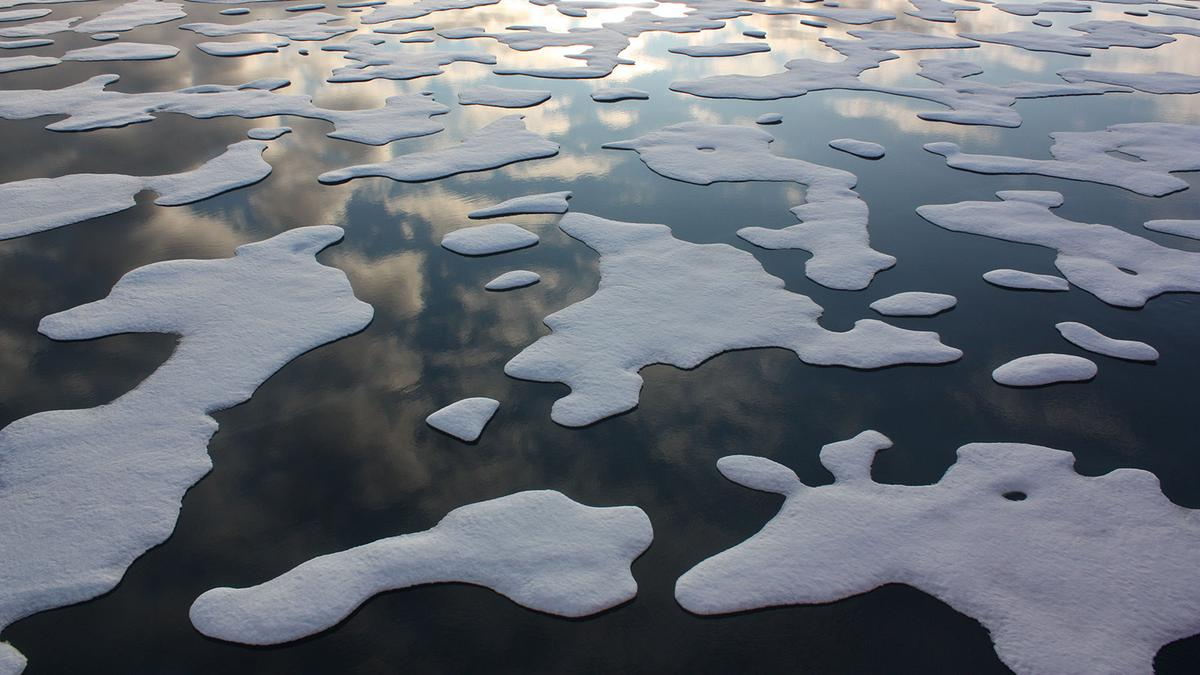 Sea ice coverage in the Arctic has declined significantly over the last few decades