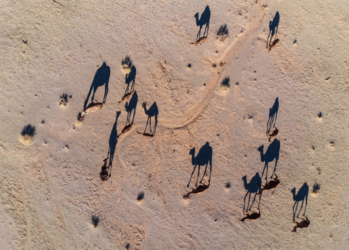Abbas Ragestar caught these camels searching for water in Torud on his DJIPhantom 4