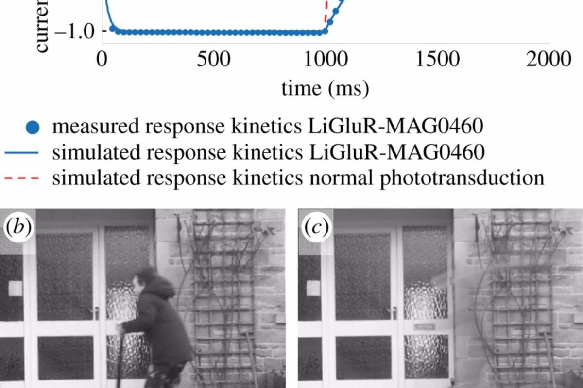 Fast-moving objects may appear invisible to people with bionic vision