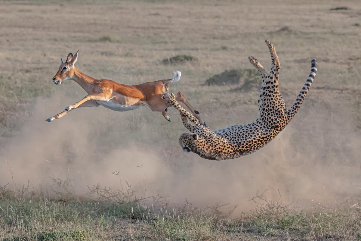 Terrestrial Wildlife Winner. 'Speed and Strategy'