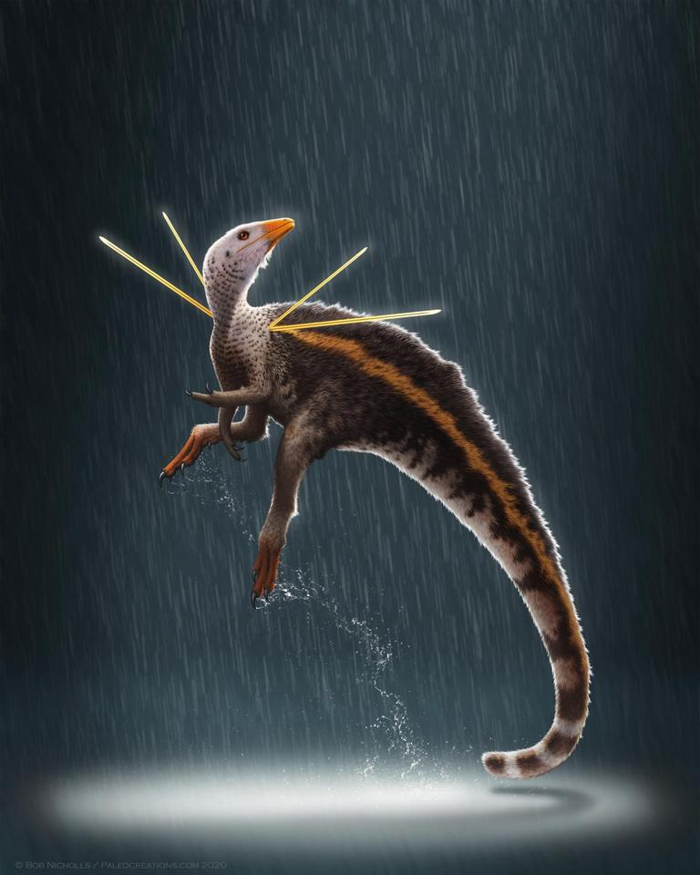 An artist's impression of Ubirajara jubatus, a new species of dinosaur found to sport strange spikes most likely used for mating displays