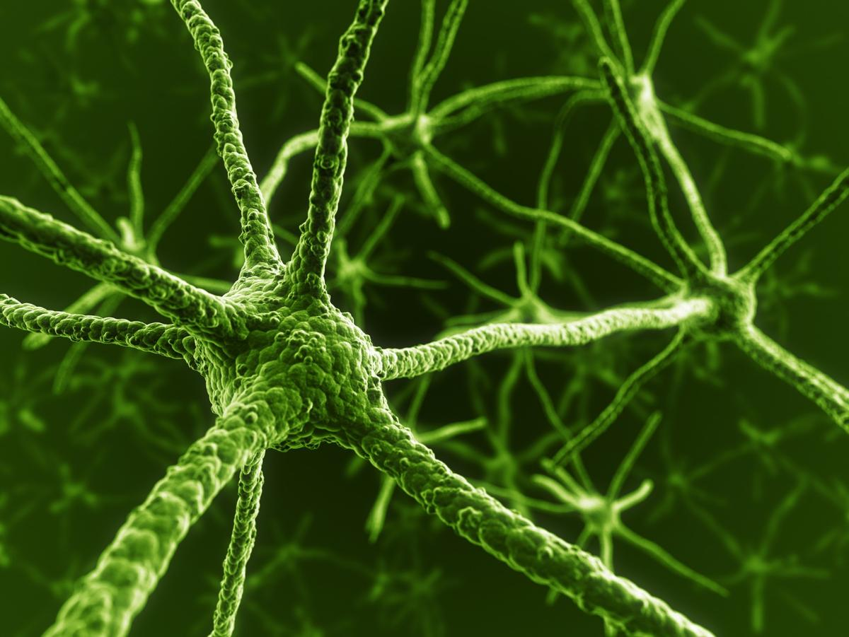 Transforming human immune cells found in a regular blood sample into functional neurons will allowfor clearer laboratory study into a variety of neurodevelopmental disorders