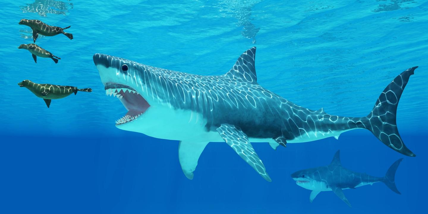 An artist's impression of Megalodon, a giant prehistoric species of shark that went extinct about 2.6 million years ago