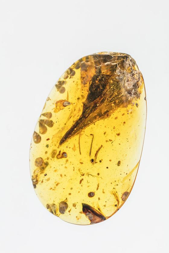 A seemingly mature skull specimen preserved in Burmese amber reveals a new species, Oculudentavis khaungraae, that could represent the smallest known Mesozoic dinosaur in the fossil record