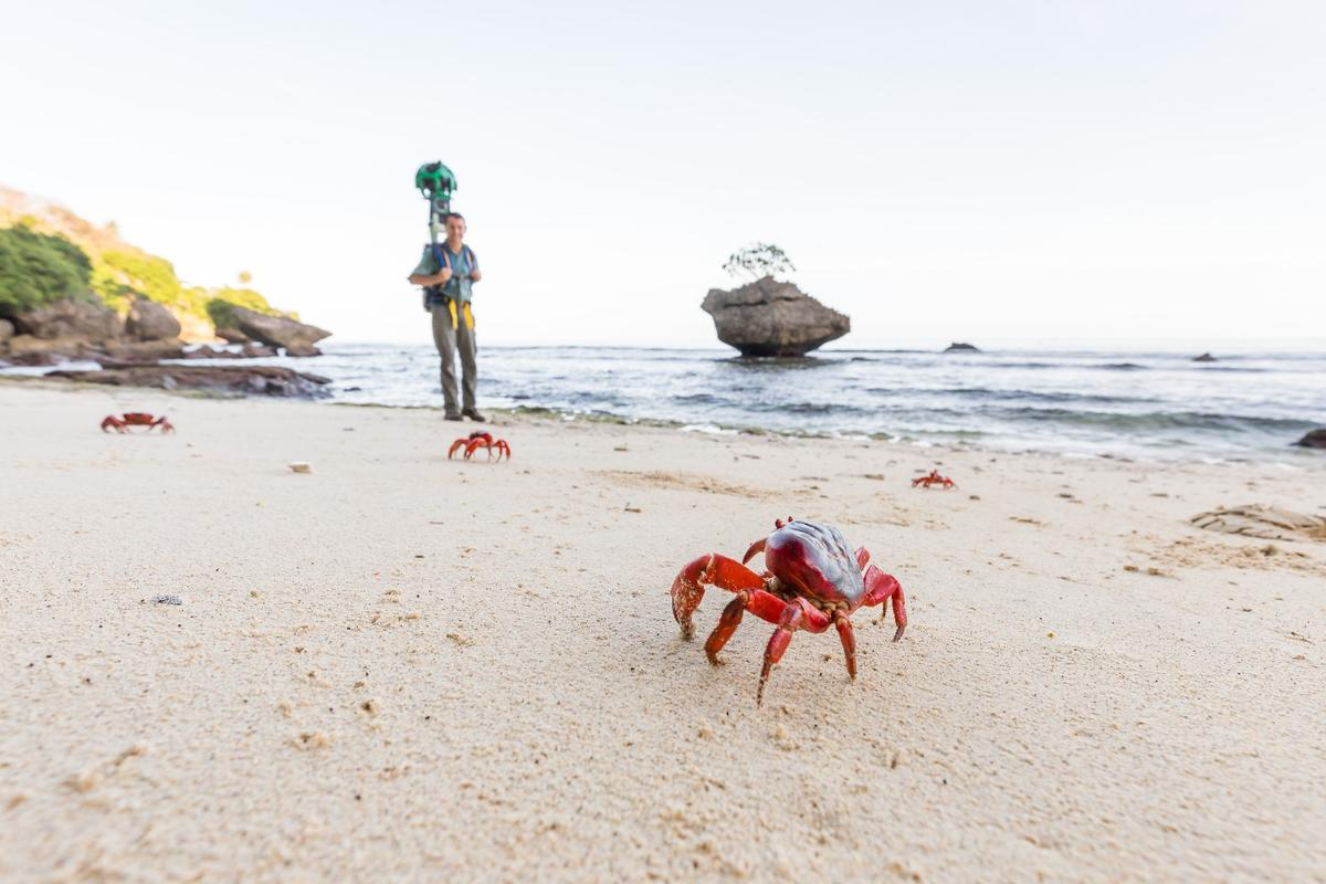 The red crabs of Christmas Island partake in a spectacular, millions-strongmigration in December each year