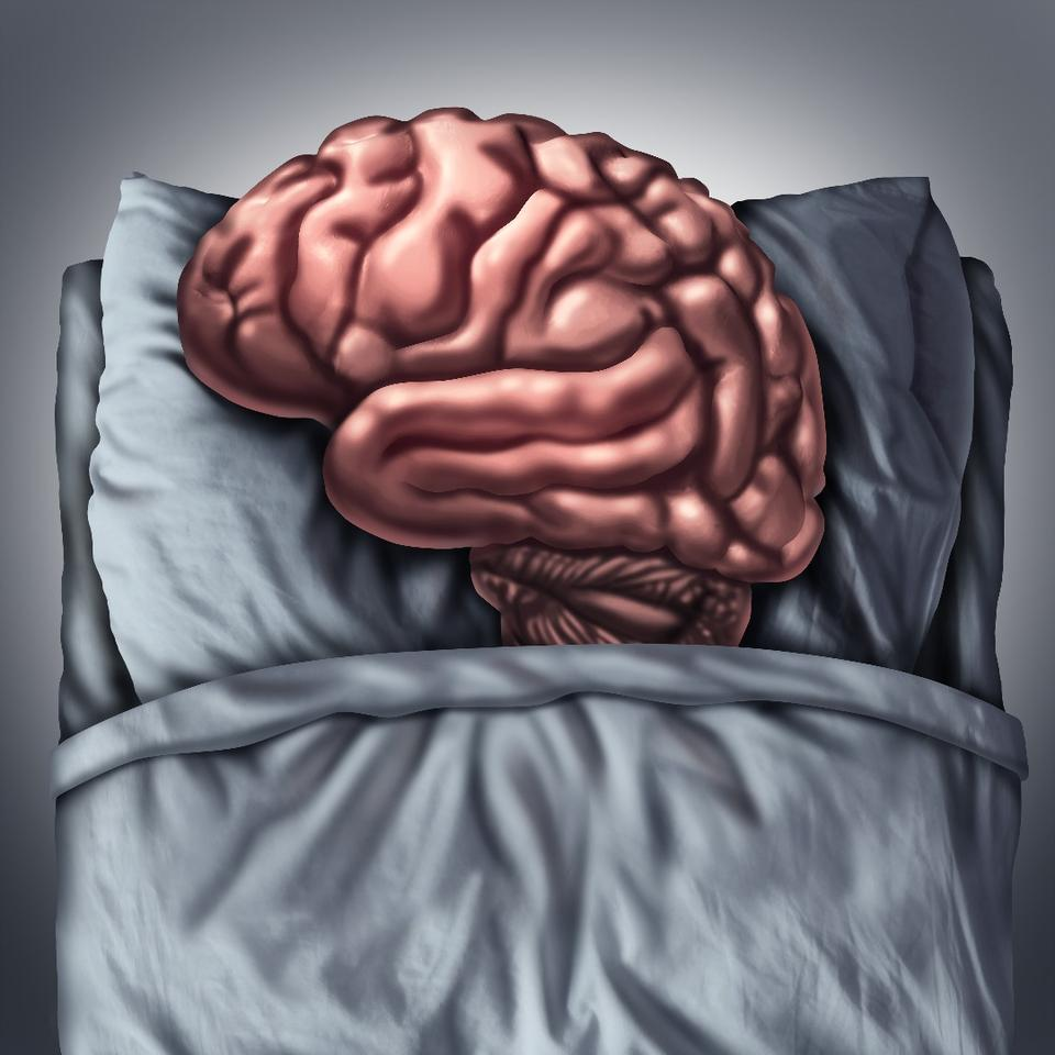 Stanford scientists have found different sections of the brain fall asleep and wake up constantly