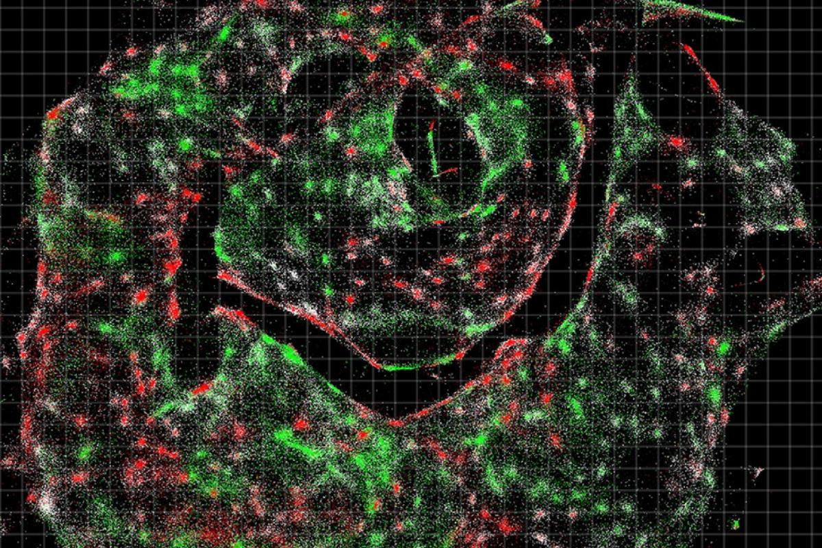 A visualization of the data for cell populations in a sample, provided by DNA microscopy