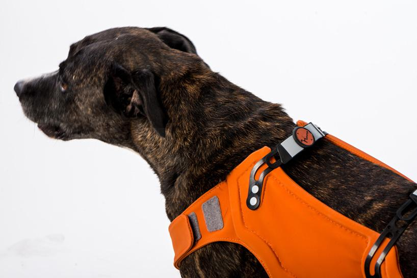 The Hipster rehabilitation brace provides support and important rear leg exercise for dogs with hip dysplasia