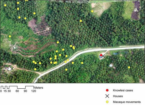 The Monkeybar project combines images collected by drones with hospital records of malaria cases and the movements of the monkeys (Photo: Kimberly Fornace/LSHTM)