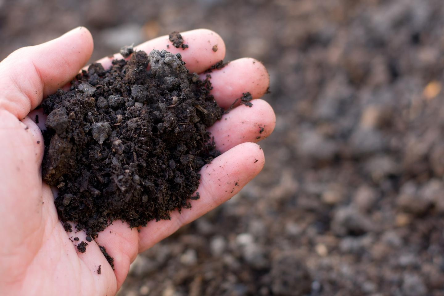 Years of research have revealed how a certain bacteria, found in dirt, can confer inflammatory effects in human beings