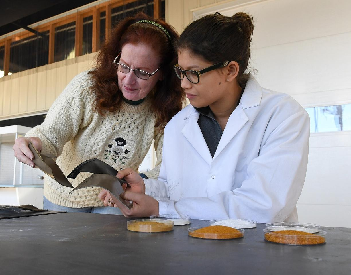 Katrina Cornish (left) and Cindy Barrera (right) examine ground tomato skins and eggshells, as well as samples of rubber