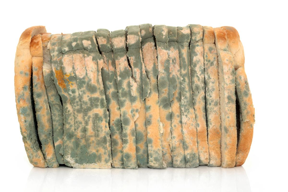 New technology could make moldy bread a much less common sight (Photo: Shutterstock)