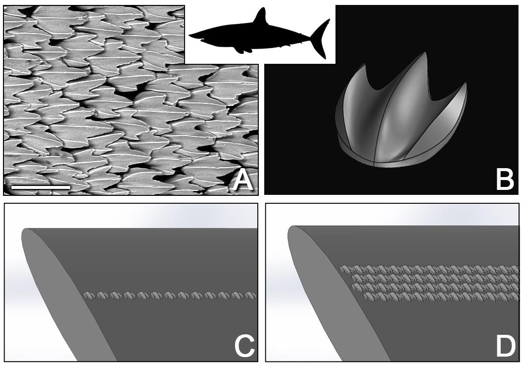 Shark skin study promises lift in airplane and turbine design