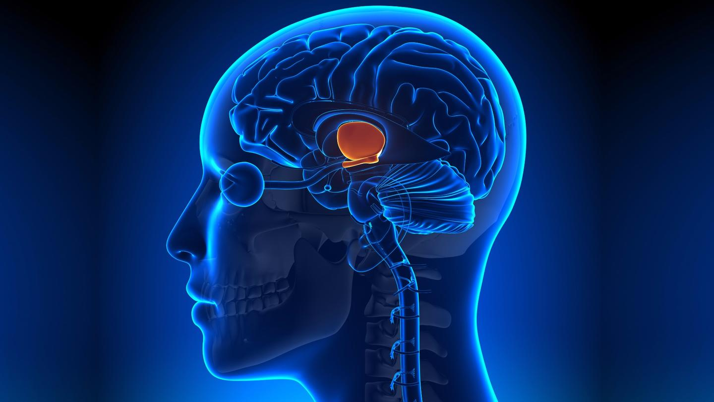 Stem cells in the hypothalamus havebeen found to influence the aging process