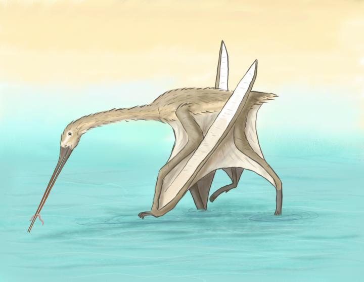 Because Leptostomia begaaensis' beak was so unlike those of other pterosaurs, it is thought that paleontologists may have been uncovering the fossilized beaks for some time now, without realizing what they were from