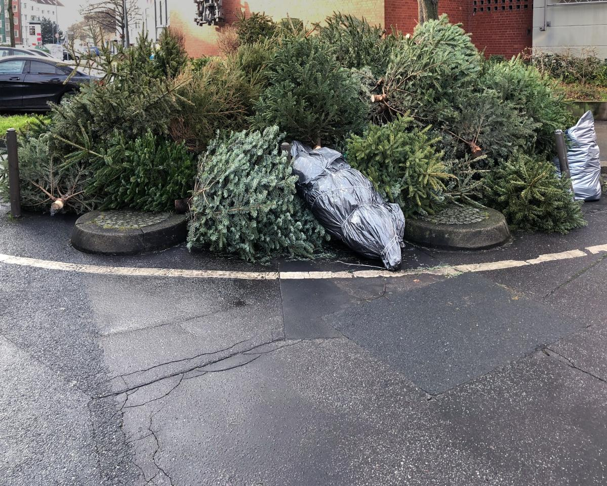According to the University of Sheffield, approximately 7 million Christmas trees annuallyend up in landfills – in the UKalone