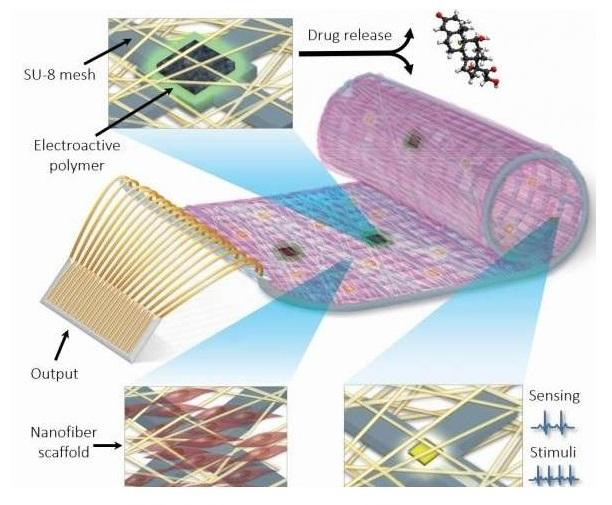 The Tissue Engineering and Regenerative Medicine Lab of the University of Tel Aviv has used advanced nanotechnology tools to create fully-functional surrogate tissue to replace that irreparably damaged by heart attack or cardiac disease
