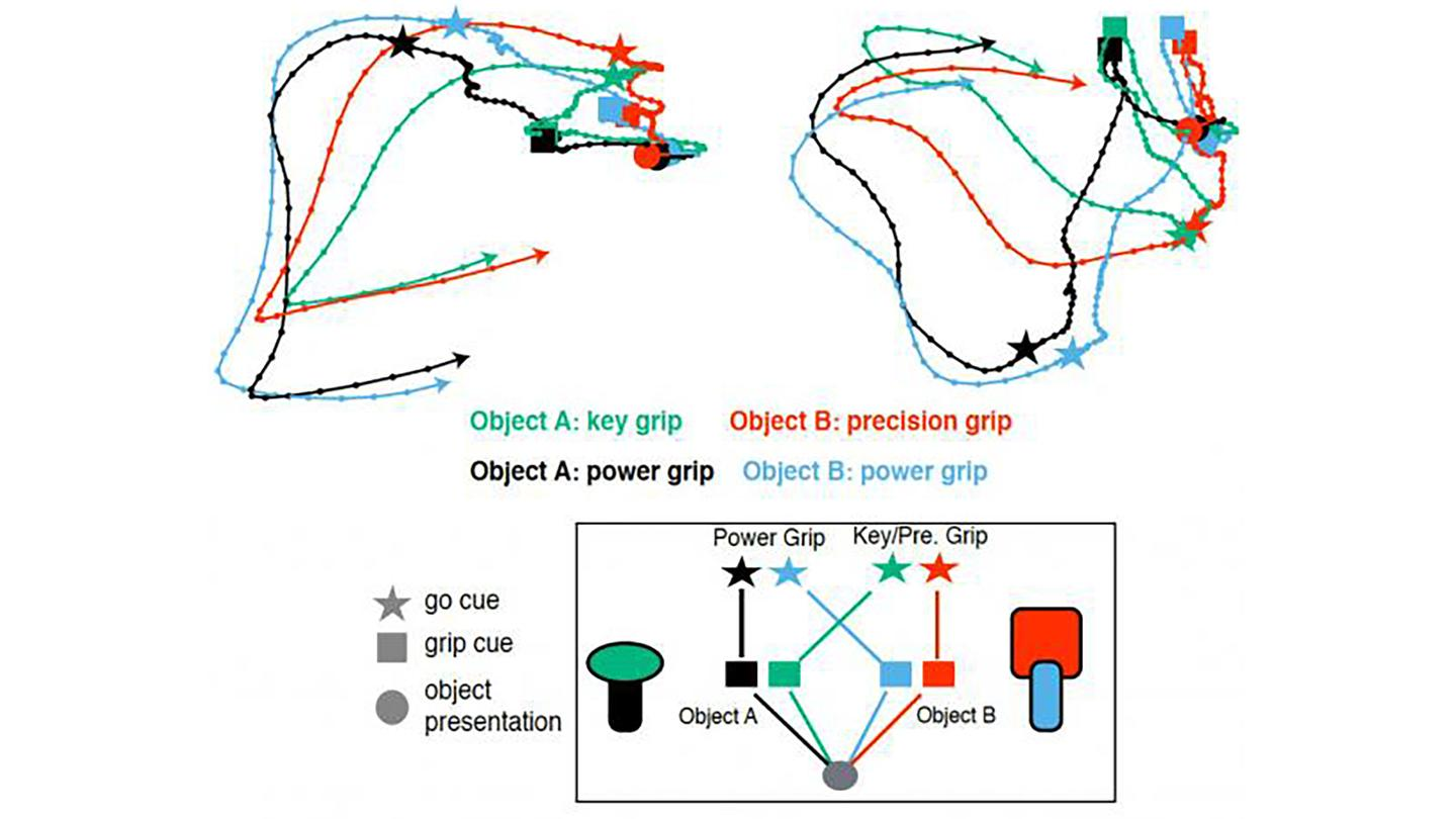 During the study, three monkeys were handed different objects, and told how to grip them via colored lights, with the patterns of neural activity recorded at every stage of the process