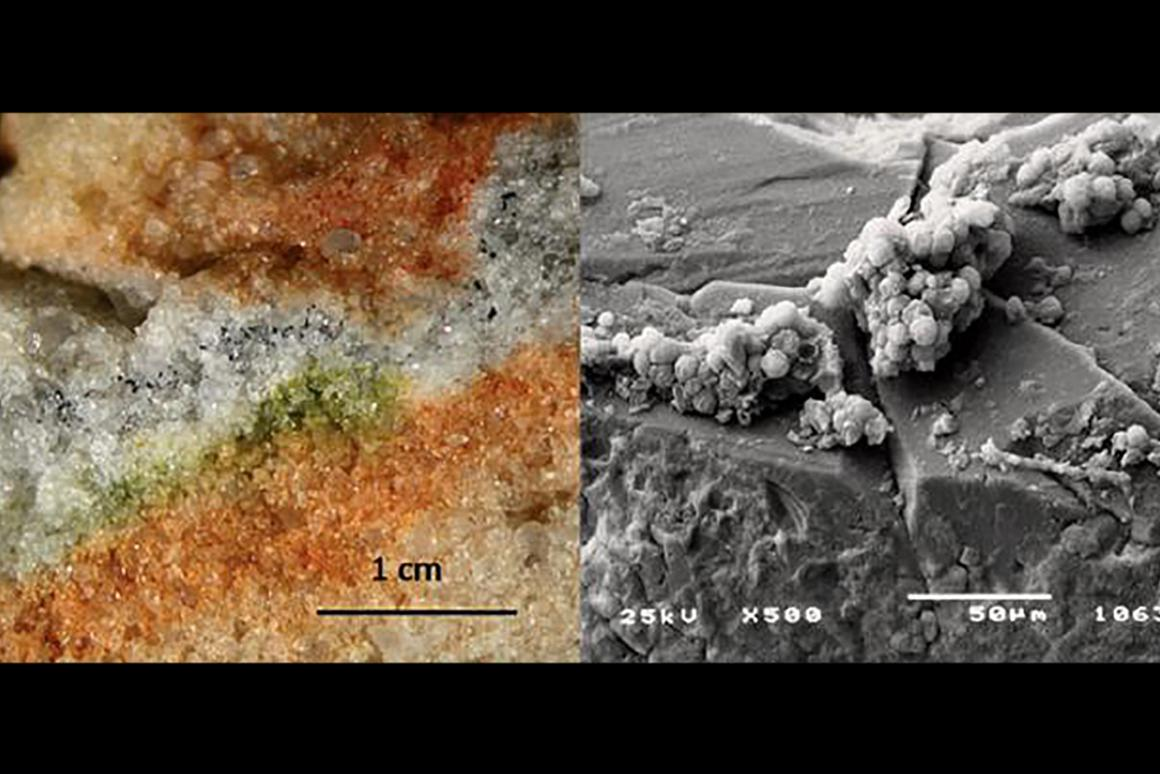 The study focused on cryptoendolithic microorganisms, which can be seen here colonizing cracks in rocks (left) and under an electron microscope (right)