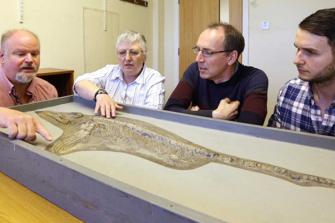 Paleontologists have identified fossils of Protoichthyosaurus, a new genus of marine reptile that was originally discovered and contested in the 1970s