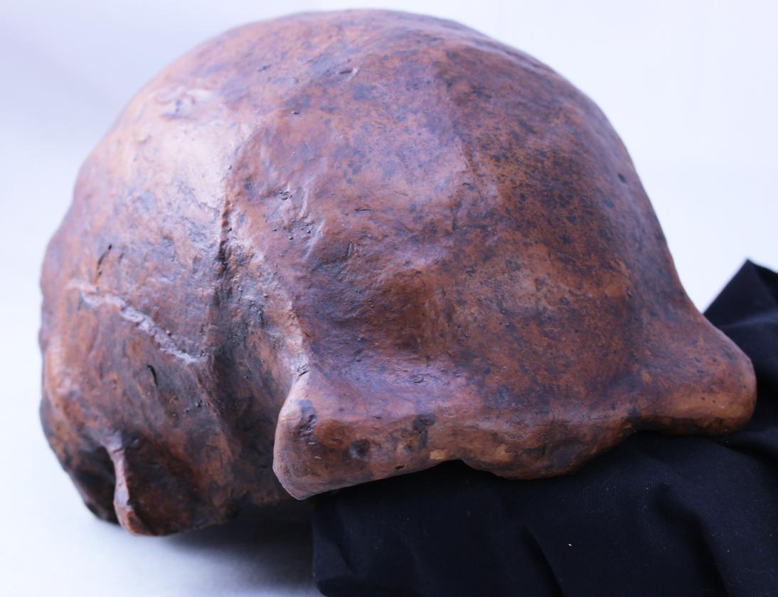 A skull cap from Homo erectus, found at the Ngandong fossil site in Java, Indonesia