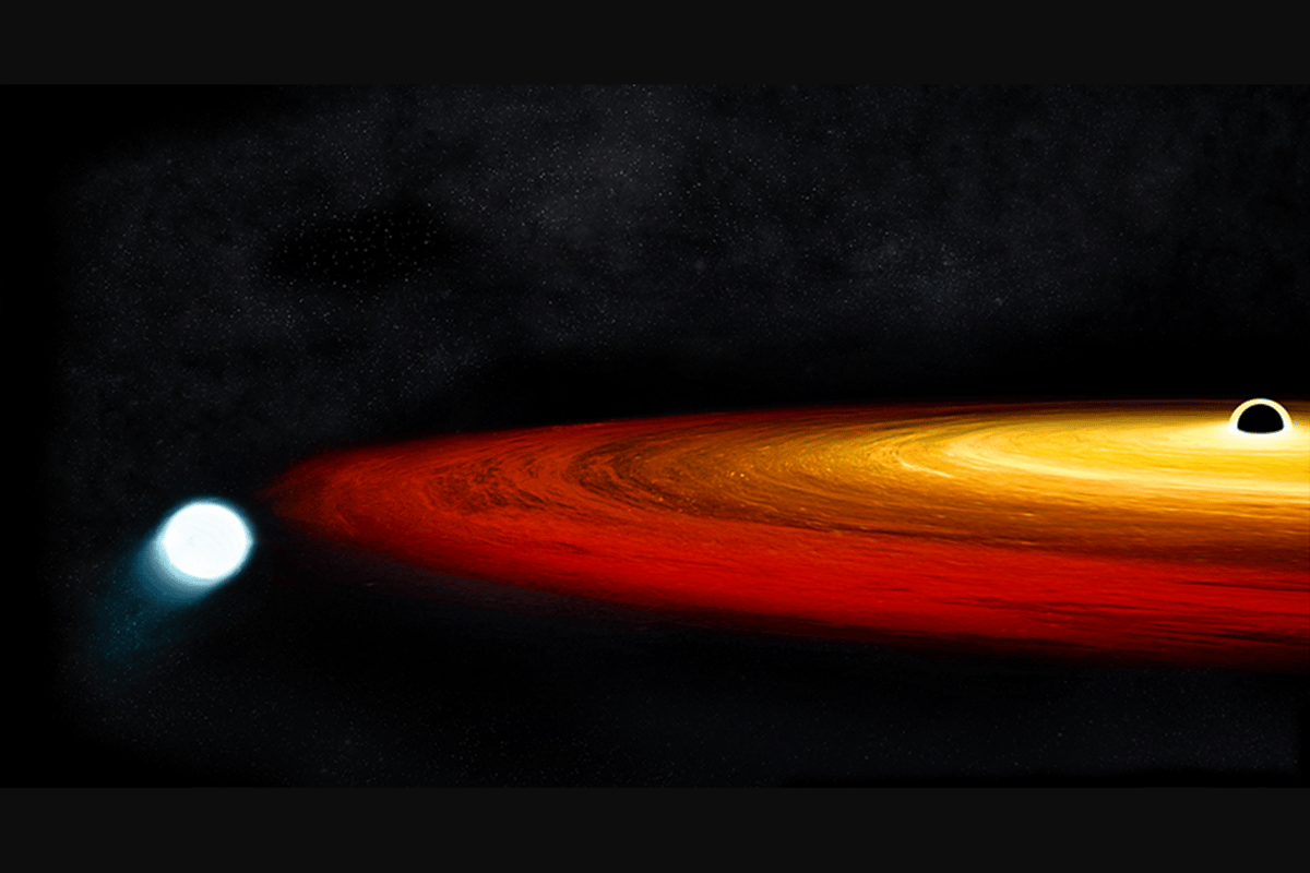 An illustration of the white dwarf orbiting the black hole in GSN 069