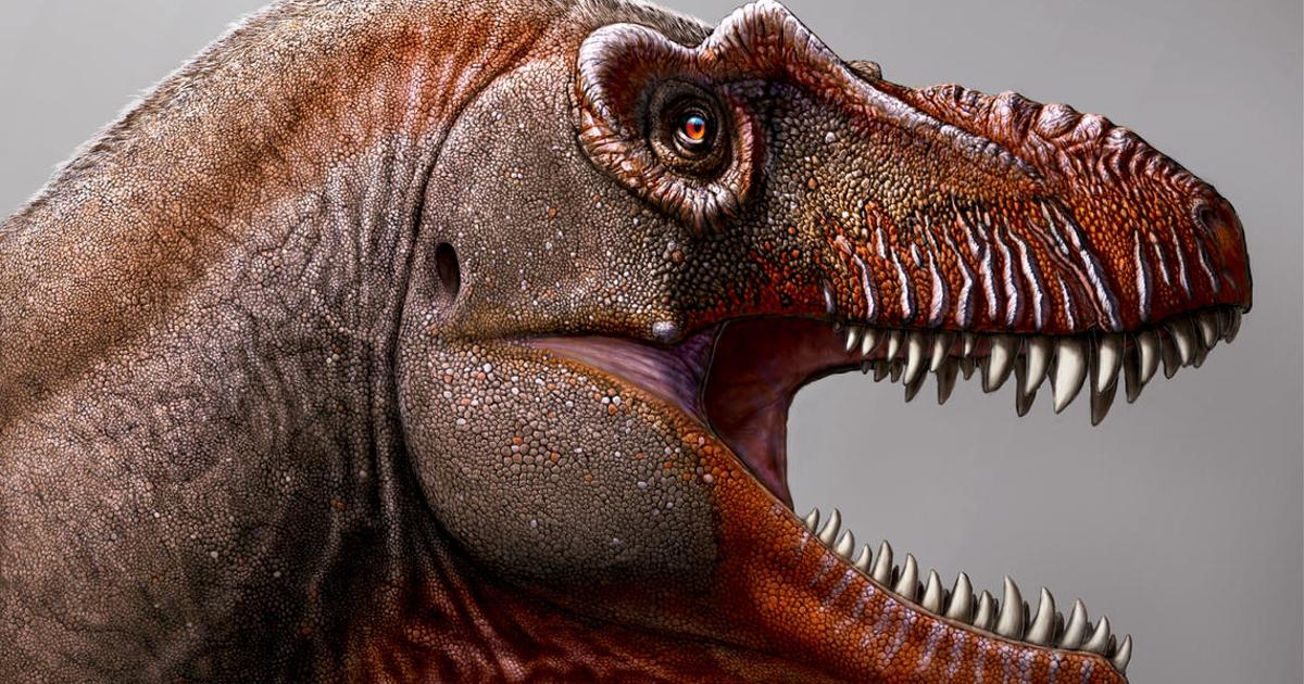 """Reaper of death"" tyrannosaur unearthed in Canada"
