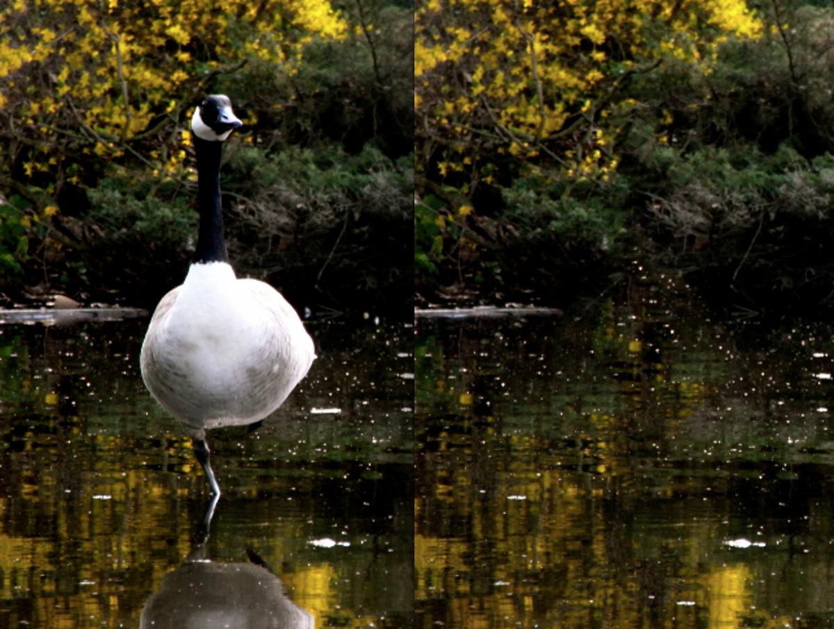Before and after: a close-up of Snapheal's goose erasure (Photo: Gizmag)