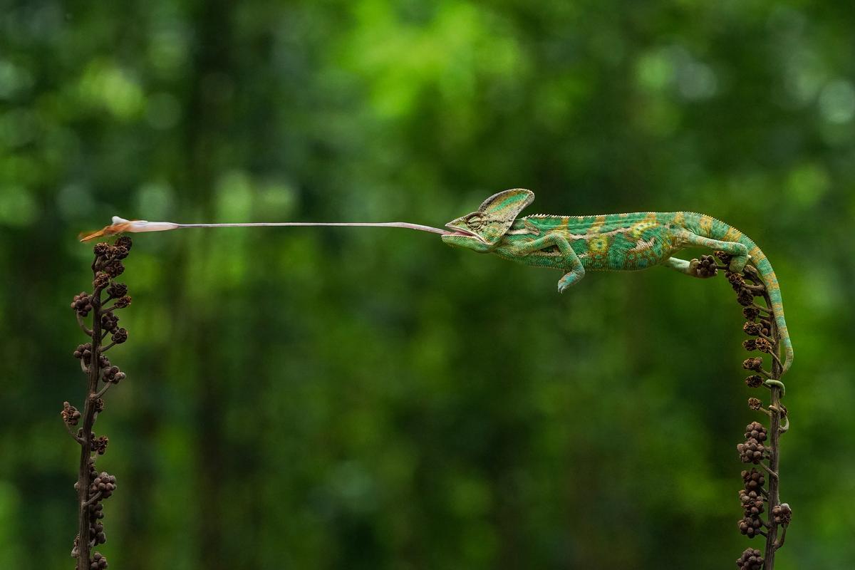 Agora's Best Nature Photography. 'Strike'. Jakarta, Indonesia