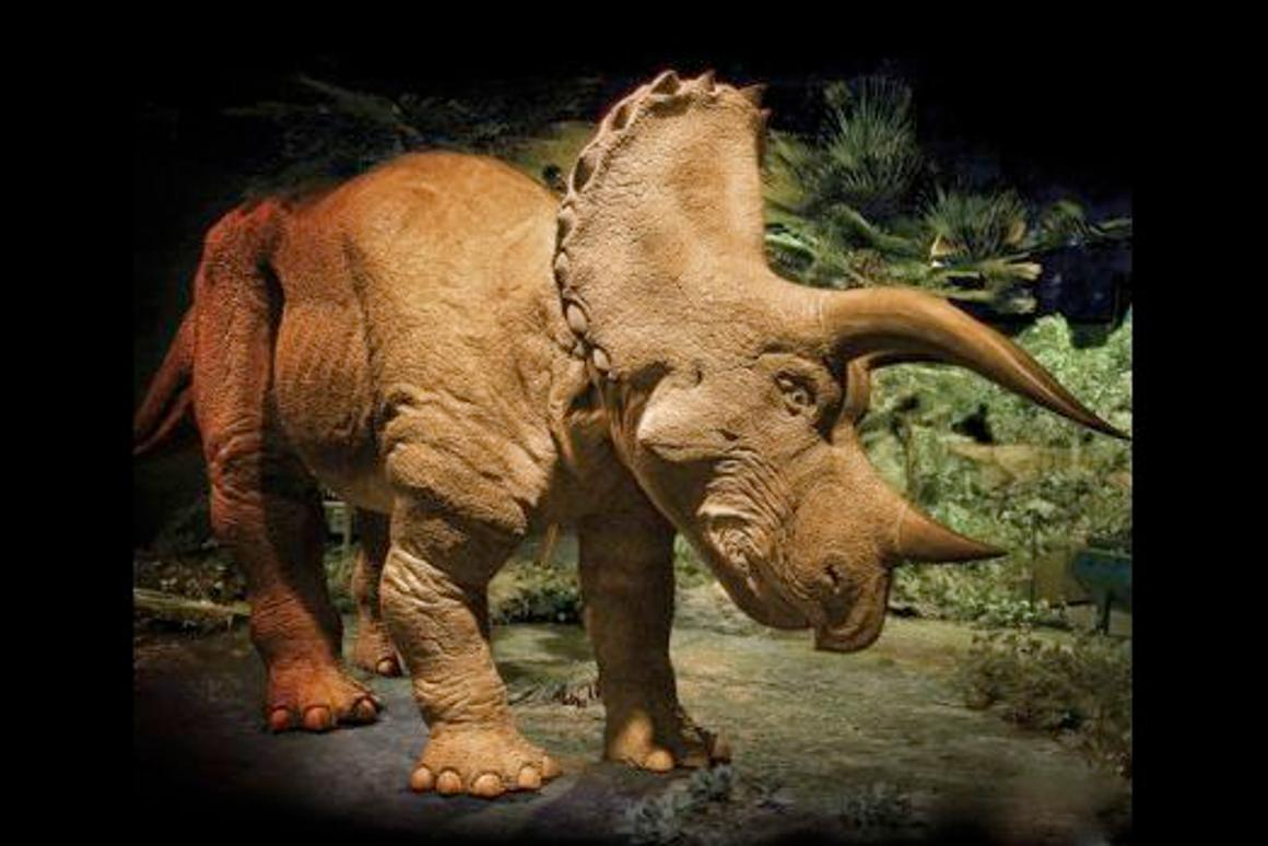 Hammacher Schlemmer is now selling a 20 foot-long interactive animatronic Triceratops, for US$350,000