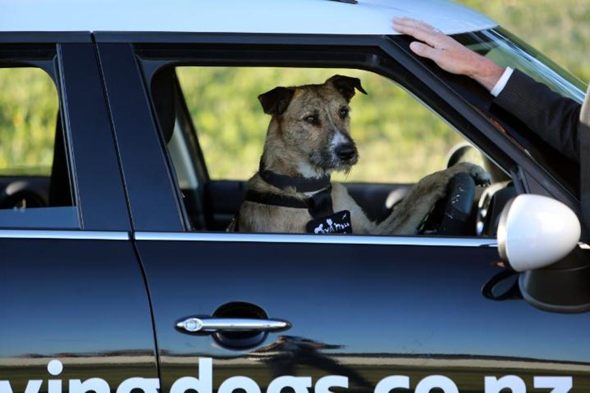 Porter, world's first driving dog