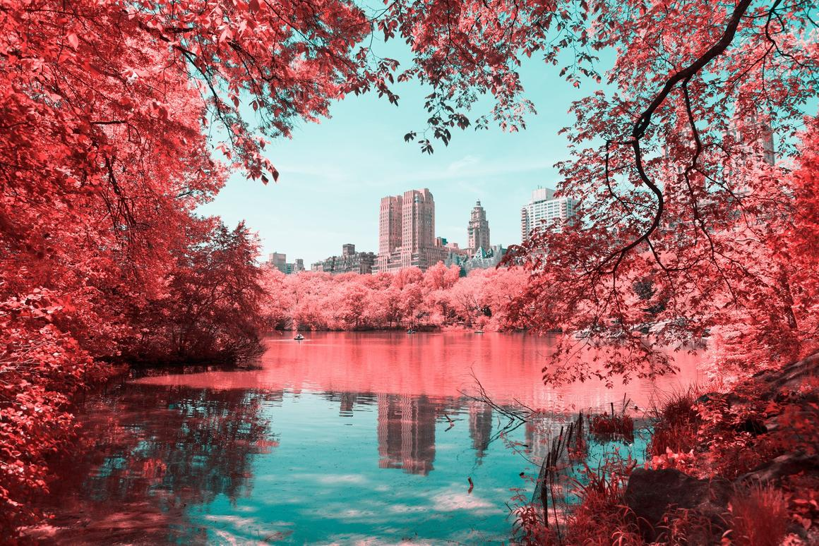 Paolo Pettigiani'sseriesInfrared NYCis a glorious examination of New York's Central Park that uses infrared filters to transform the greenery into a pink and red wonderland