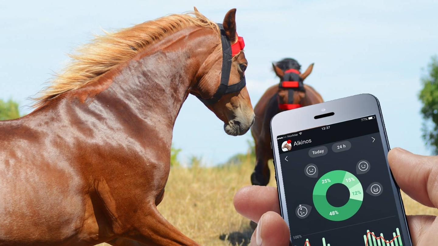 HoofStep users can utilize the app whenever they want, simply to check where their horse is and what it's doing