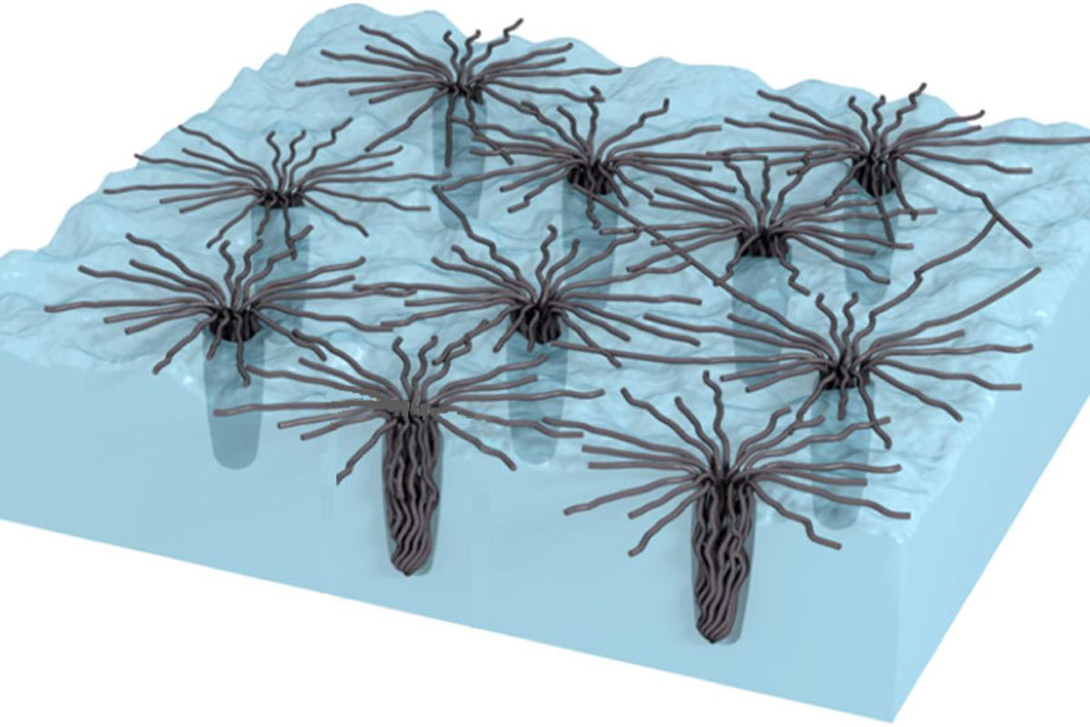 Carbon nanotubes collapse to penetrate and grip a surface