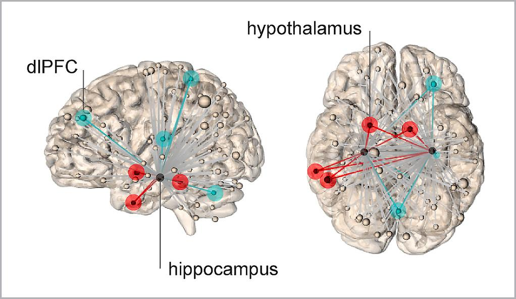 The sensation of stress is generated by neural networks emanating from the hippocampus. Networks represented by red lines show connections to hypothalamus, which predict higher levels of stress. The blue lines represent connections to dorsal lateral frontal cortex, and lower subjective levels of stress