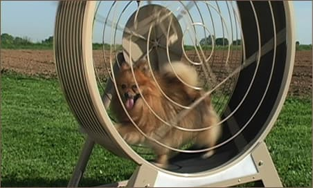 Treadmills to keep your dog fit and entertained