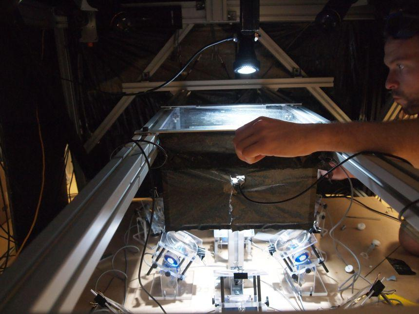 A mini-movie studio with eight high-speed cameras was built to capture the mosquitos in action