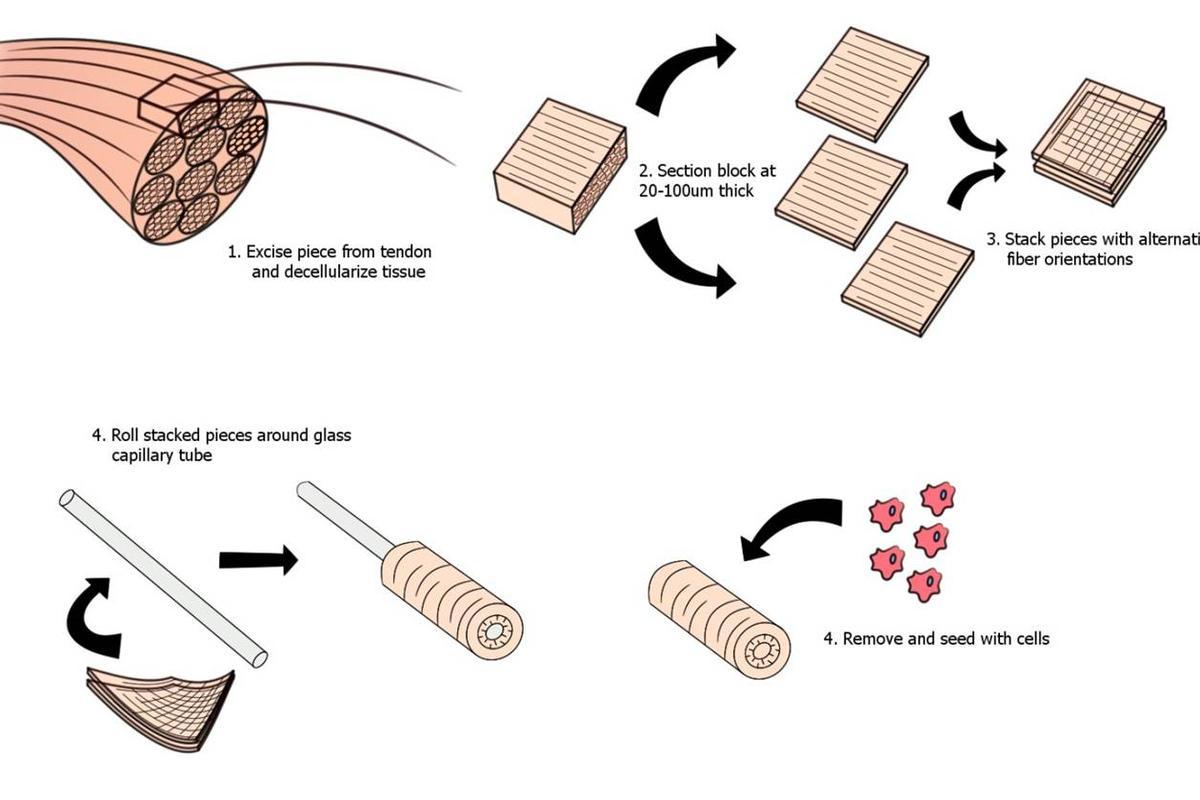 The bioskiving process (Image credit: Qiaobing Xu)