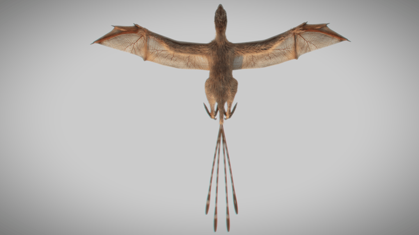 Ambopteryx longibrachium looked like a strange cross between a bird, a bat and a therapod dinosaur